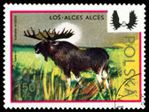 Vintage  postage stamp. Moose. — Stock Photo