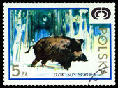 Vintage  postage stamp. Wild boar. — Stock Photo
