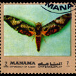 Vintage  postage stamp. Butterfly Protambulyx eurycles. — Stock Photo #63635151