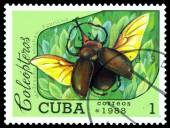 Vintage  postage stamp.   Beetle Megasoma elephas. Fabricius. — Stock Photo