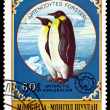 Vintage  postage stamp.  Emperor penguins. — Stock Photo #64526635
