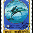 Vintage  postage stamp. Giant blue Whale. — Stock Photo #64526779