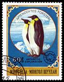 Vintage  postage stamp.  Emperor penguins. — Photo