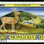 Vintage  postage stamp. Mongolian Deer. — Stock Photo #65300973