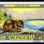 Vintage  postage stamp. Mongolian Beaver. — Stock Photo #65301013