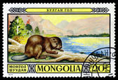 Vintage  postage stamp. Mongolian Beaver. — Stock Photo