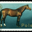 Vintage  postage stamp. Arabian Stallion. — Stock Photo #65460781