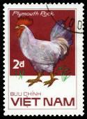Vintage  postage stamp. Bird Plymouth Rock. — Stock Photo