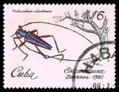Vintage  postage stamp. Beetle Pinthocoelium columbinum. — 图库照片