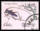 Vintage  postage stamp. Beetle Pinthocoelium columbinum. — Foto de Stock