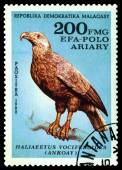 Vintage  postage stamp. Bird Haliaeetus Vociferoides. — Stock Photo