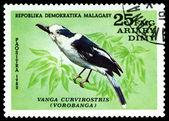 Vintage  postage stamp. Bird Vanga Curvirostris. — Stock fotografie