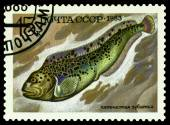 Vintage  postage stamp. Fish Anarhichas minor. — Stock Photo