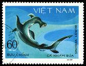 Vintage  postage stamp. Sphyrna Lewini. — Stockfoto