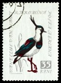 Vintage  postage stamp. Northern Lapwing. — Stock Photo