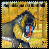 Vintage  postage stamp. Mandrill. Animals Burundi. — Stock Photo