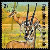 Vintage  postage stamp. Thomson Gaselies . Animals Burundi. — Stock Photo