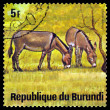 Vintage  postage stamp. African  Wild Asses. Animals Burundi. — Stock Photo #69100491