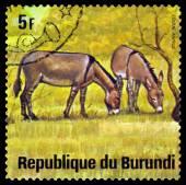 Vintage  postage stamp. African  Wild Asses. Animals Burundi. — Stock Photo