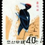 Vintage  postage stamp. Bird  Black Woodpecker. — Stock Photo #70493333