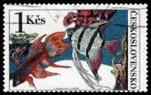 Vintage  postage stamp. Beta splendes regan. — Stock Photo