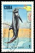 Vintage  postage stamp. Risso's dolphin. — Stock Photo
