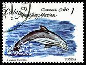 Vintage  postage stamp. Bottlenose dolphin. — Stock Photo