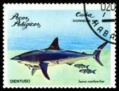 Vintage  postage stamp. Isurus oxyrhynchus. — Стоковое фото