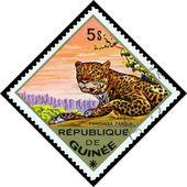 Vintage  postage stamp.  Leopard. Africa. — Stock Photo