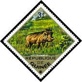 Vintage  postage stamp. Desert  warthog. — Stock Photo