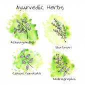 Handdrawn set - Ayurvedic Herbs — Stock Vector