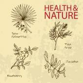 Handdrawn Illustration - Health and Nature Set — Stock Vector