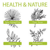 Handdrawn Set - Health and Nature. Collection of Medicine Herbs — Stock Vector