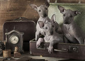 Retro styled puppies portrait  — Stock Photo
