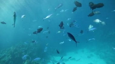 Fish swimming through sun beams of the Red Sea — Stock Video