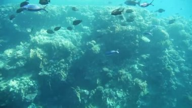 Underwater footage of sea life. Red Sea, Egypt — Stock Video