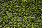 Green plant texture — Stock Photo