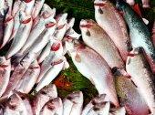 Fresh sea fish — Stock Photo