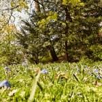 Spring background — Stock Photo #69714917