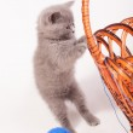 Little kitten with the basket — Stock Photo #69715741