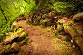 Lane in the woods — Stock Photo