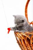 Playful little kitten isolated on white — 图库照片