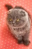 Playful little kitten — Stock Photo
