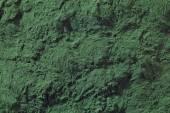 Spirulina algae powder — Stockfoto