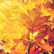 Autumn Leaves — Stock Photo #55571219