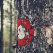 Sign on the tree — Stock Photo #60892285