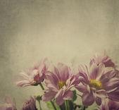 Ροζ λουλούδια — Φωτογραφία Αρχείου
