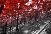 Autumn in the park.  — Stock Photo
