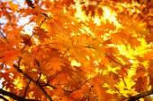 Hösten i parken. — Stockfoto