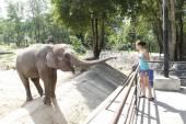 žena krmení slonů — Stock fotografie